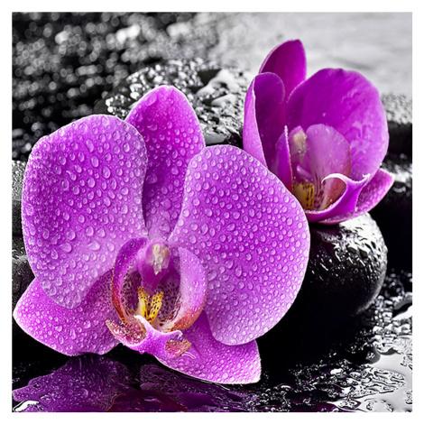 Monee OBRAZ NA SKLE, orchideje, zen cm
