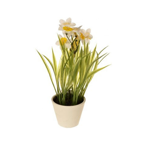 EverGreen Narcis v květináči , výška 22 cm, barva bílá