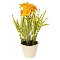 EverGreen Narcis v květináči , výška 22 cm, barva žluto-oranžová