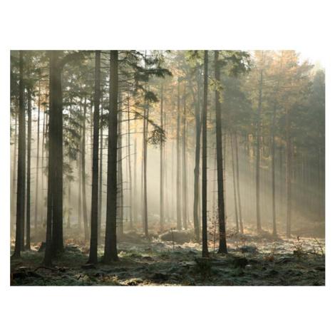 Velkoformátová tapeta Artgeist Foggy November Morning, 200 x 154 cm