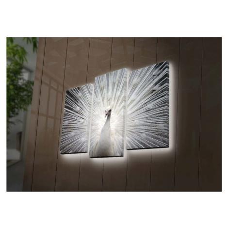 Podsvícený 3dílný obraz Ledda Peafowl